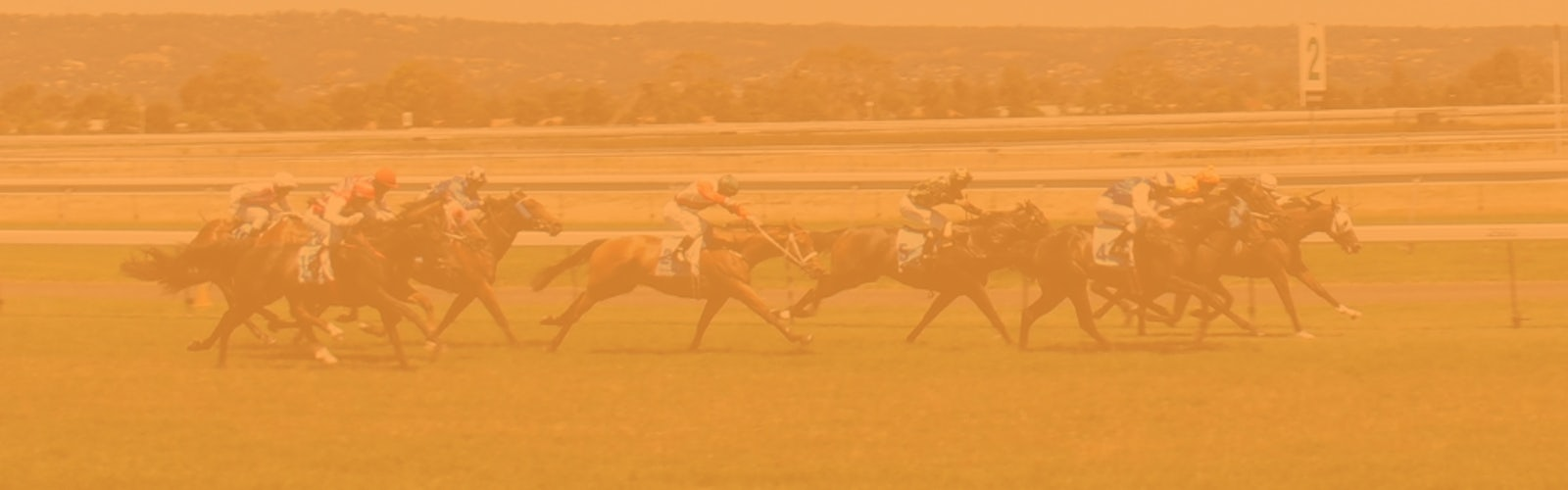 Horse Racing Betting Sites India